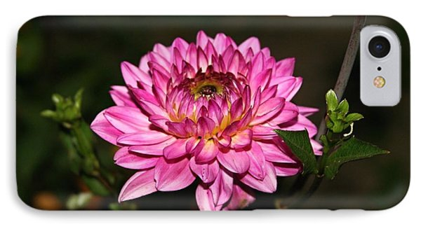 IPhone Case featuring the photograph Dahlia Lucca Johanna by Margaret Newcomb