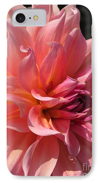 IPhone Case featuring the photograph Dahlia Named Fire Magic by J McCombie