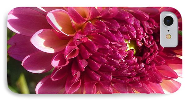 IPhone Case featuring the photograph Dahlia Pink 1 by Susan Garren
