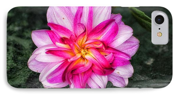 IPhone Case featuring the photograph Dahlia Portrait by Beth Akerman