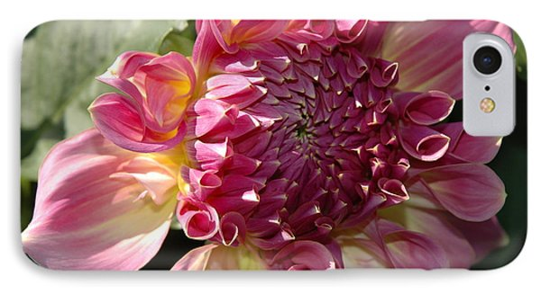 Dahlia V IPhone Case by Christiane Hellner-OBrien