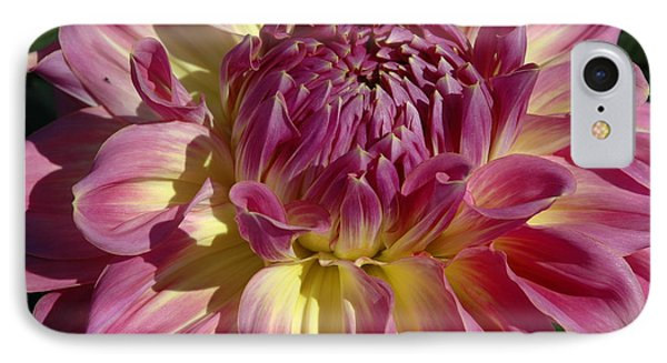 Dahlia Vii IPhone Case by Christiane Hellner-OBrien