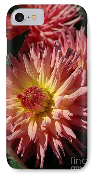Dahlia Viii IPhone Case by Christiane Hellner-OBrien