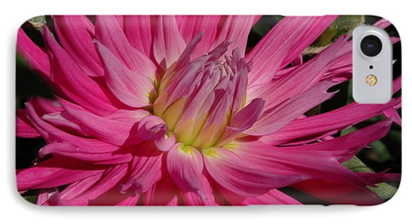 IPhone Case featuring the photograph Dahlia X by Christiane Hellner-OBrien
