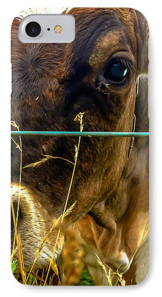 Dairy Cow IPhone Case by Bob Orsillo