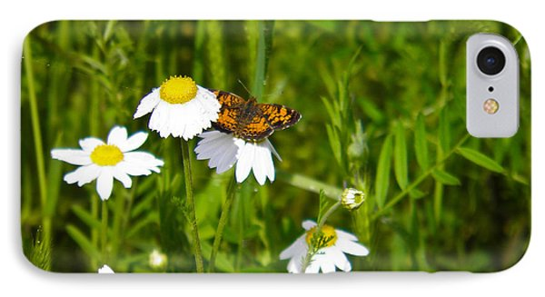 Daisey And Butterfly IPhone Case by Nick Kirby