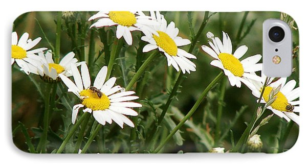 Daisies 1 IPhone Case