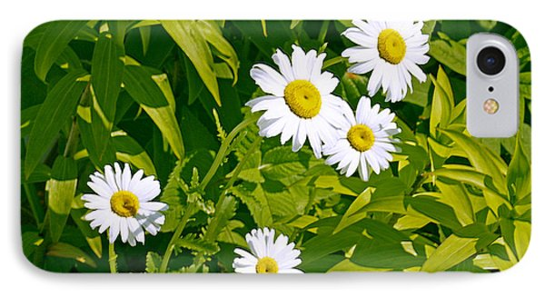Daisies In Provincetown IPhone Case by Tom Doud