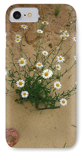 Daisies In The Sand Phone Case by Randy Pollard