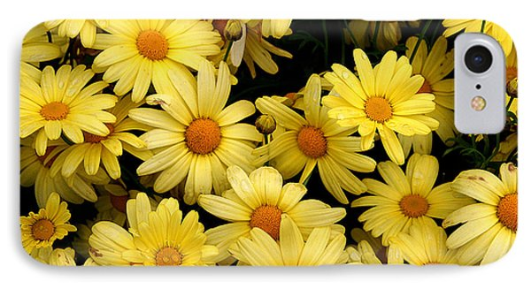 Daisies IPhone Case by John Bushnell