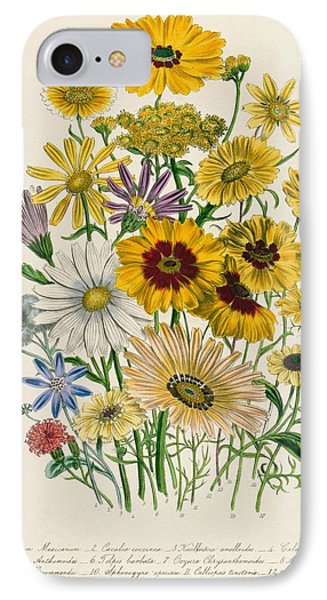 Daisies IPhone Case by Jane Loudon