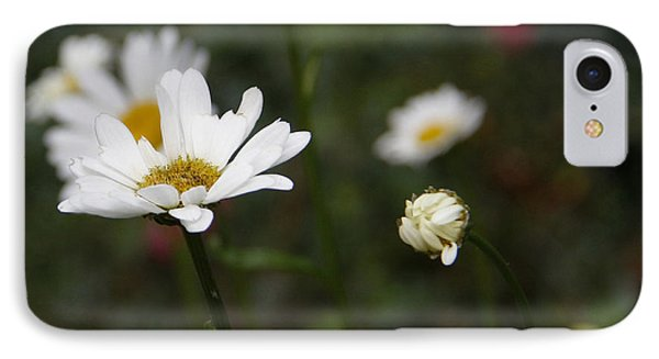 Smiling Daisies IPhone Case by Yvonne Wright