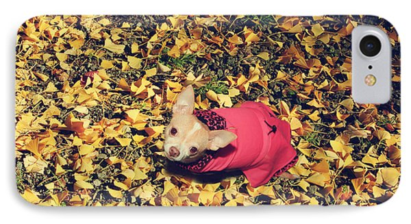 Daisy And A Blanket Of Gold IPhone Case by Laurie Search