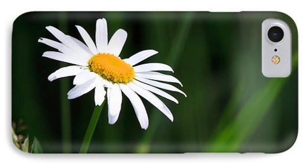 Daisy - Bellis Perennis IPhone Case by Bob Orsillo