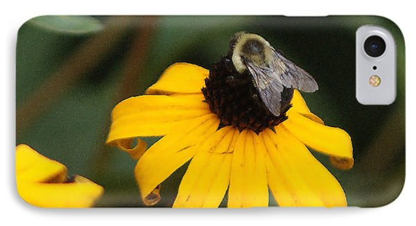 Daisy Bumble Bee IPhone Case by B Wayne Mullins