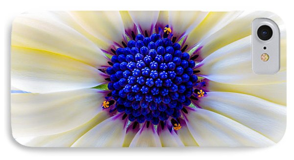 Daisy Centre IPhone Case by Keith Hawley