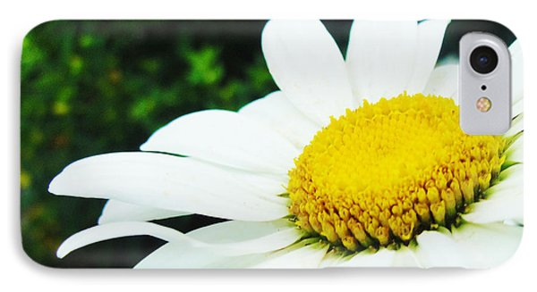IPhone Case featuring the photograph Daisy Daisy by Tiffany Erdman