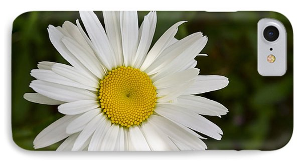 Daisy Day IPhone Case