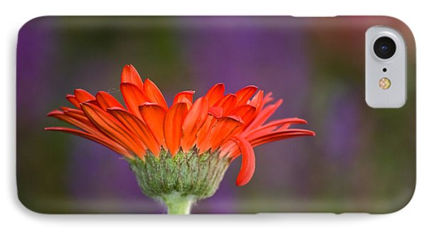 Daisy For Monet IPhone Case by Cara Moulds