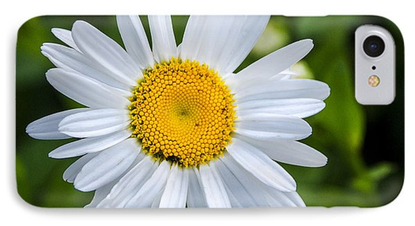 IPhone Case featuring the photograph Daisy by Phil Abrams