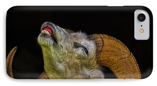 Dall Sheep IPhone Case by Ken Morris