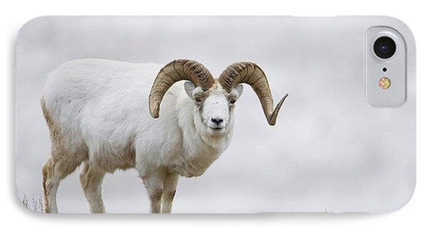 Dall Sheep Ram On Sheep Mountain IPhone Case by Milo Burcham