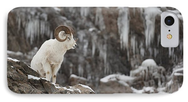 Dall Sheep Ram Stands On A Rocky Cliff IPhone Case by Doug Lindstrand
