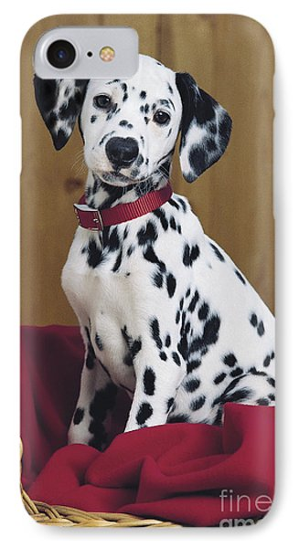 Dalmatian In Basket A108 IPhone Case by Greg Cuddiford