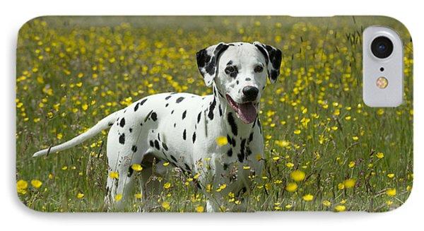 Dalmatian In Buttercups IPhone Case by John Daniels