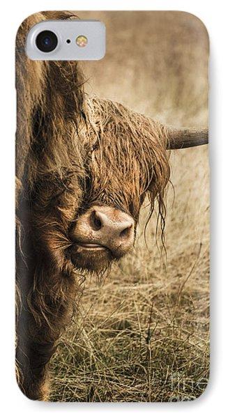 Highland Cow Damn Fleas IPhone Case