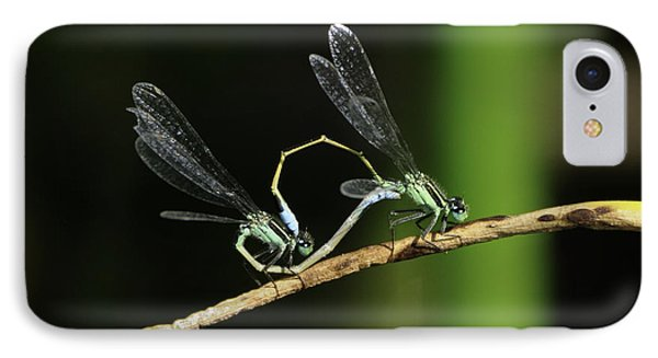IPhone Case featuring the photograph Damselflies Mating by Bradford Martin