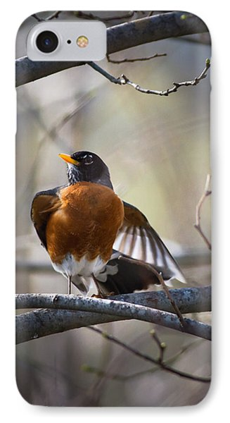 Dance Of The Robin IPhone Case by Annette Hugen