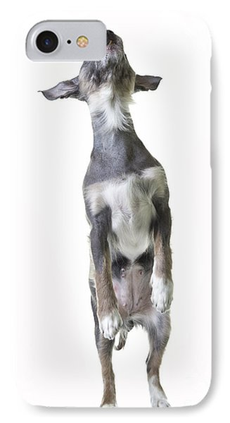 Dancing Dog Phone Case by Edward Fielding