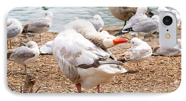 Dancing Goose 2 Phone Case by Bob Gross