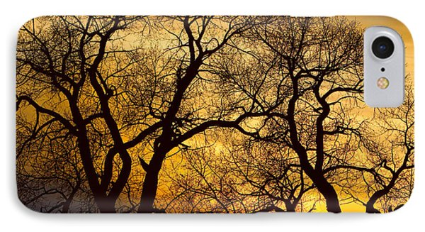 Dancing Trees Golden Sunset IPhone Case by James BO  Insogna