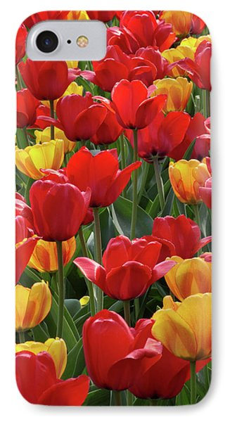 IPhone Case featuring the photograph Dancing Tulips by Harold Rau