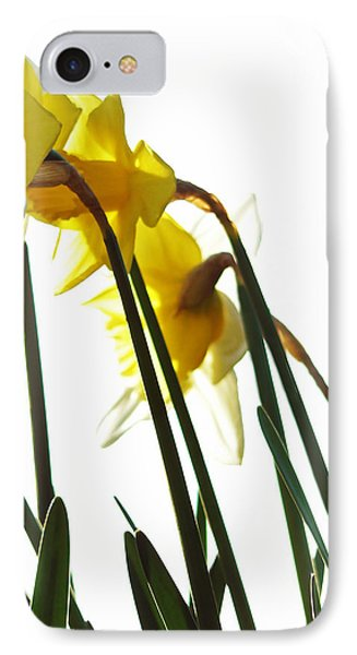 Dancing With The Daffodils Phone Case by Pamela Patch