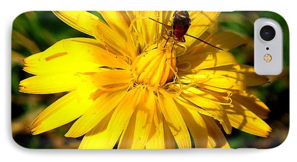 IPhone Case featuring the photograph Dandelion And Bug by Pete Trenholm