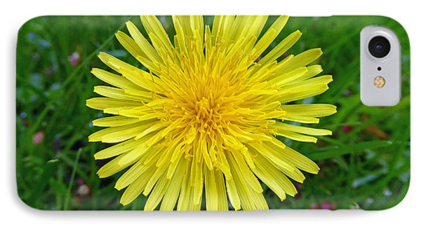 IPhone Case featuring the photograph Dandelion And Spider by Laurie Tsemak