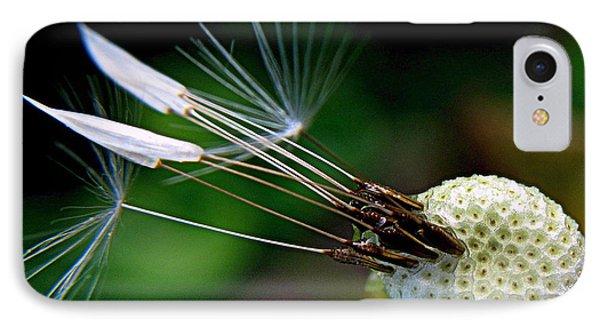 IPhone Case featuring the photograph Dandelion Arrows by Suzy Piatt