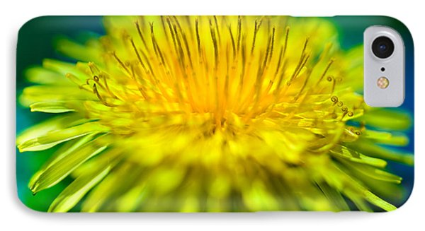 Dandelion Bloom  IPhone Case by Iris Richardson