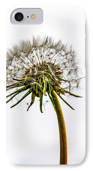Dandelion Phone Case by Hannes Cmarits