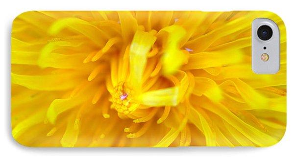Dandelion In Macro IPhone Case