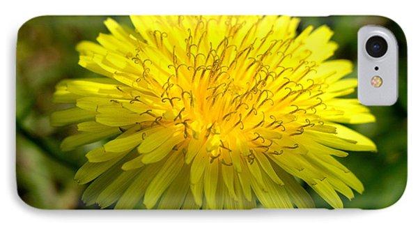 Dandelion IPhone Case by Ron Harpham