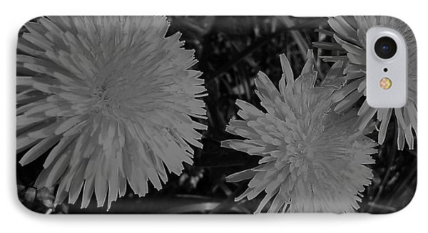 Dandelion Weeds? B/w IPhone Case by Martin Howard