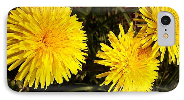 Dandelion Weeds? IPhone Case by Martin Howard