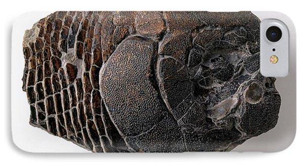 Dapedium Skull IPhone Case by Dorling Kindersley/uig
