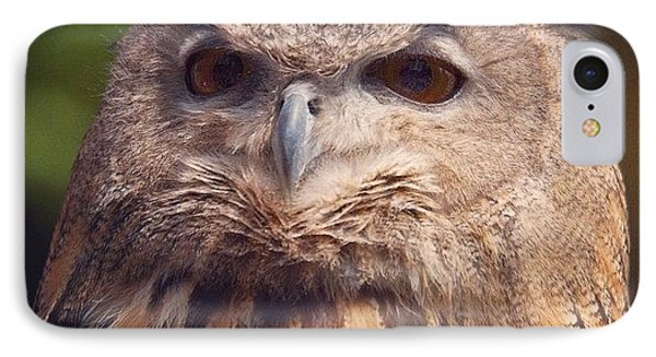 Dare I Say Owls Are A Hoot? IPhone Case by Heidi Hermes