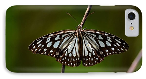 Dark Glassy Tiger Butterfly On Branch IPhone Case by Imran Ahmed