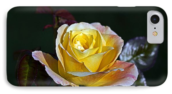 IPhone Case featuring the photograph Day Breaker Rose by Kate Brown